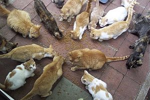 A group of cats circle around catfood