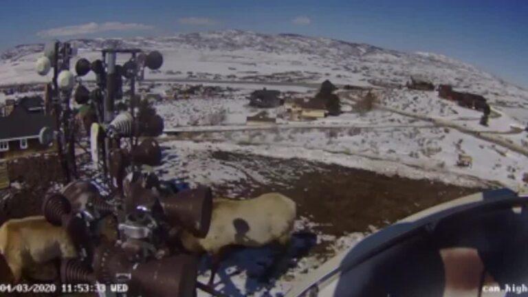 battling Utah elks
