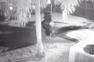 still of surveillance footage of the garbage bag-suited suspect