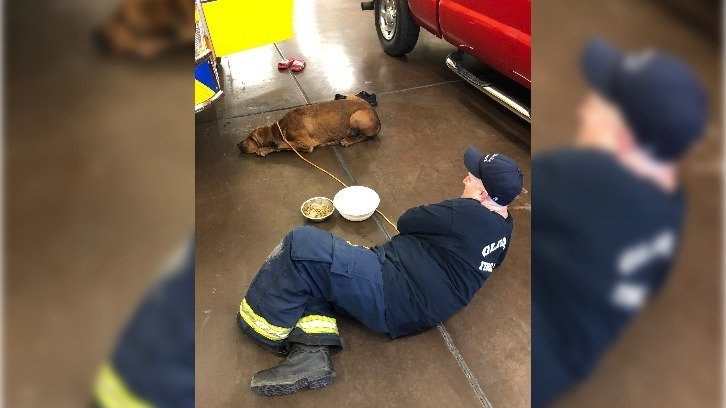 Hank the dog recovering under the care of Glendale firefighters at a nearby fire station