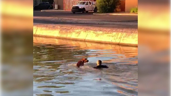 Phoenix PD Officer Conor McCarthy in the canal with Hank the dog, whom he helped to safety