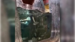 Louisiana man Kevin Wise filmed swimming with fish in the aquarium