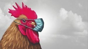 chicken wearing face mask